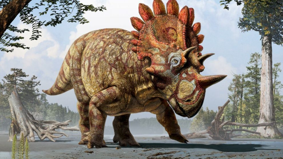 New study suggests dinosaurs have headgears to advance sexual selection