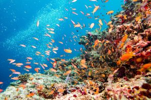 Soon, a cling film will wrap the Great Barrier Reef to prevent environmental degradation