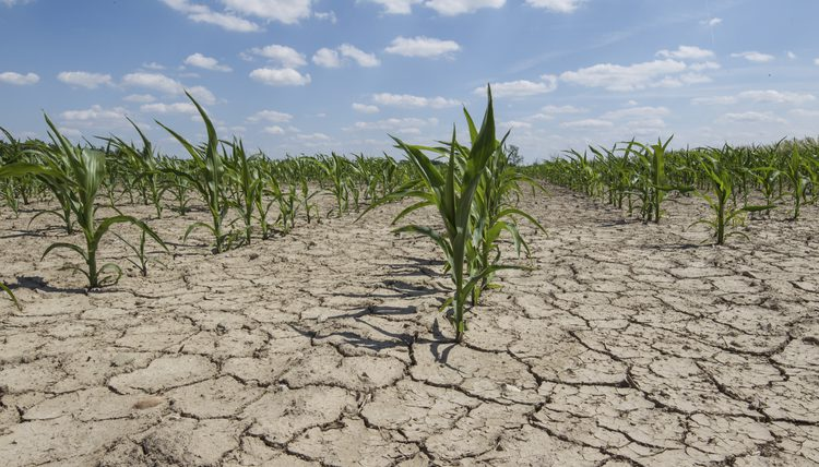 Horrendous drought could cause end of the world in next five billion years