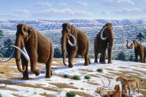 Woolly Mammoth will be resurrected from the dead as early as this year, says researchers
