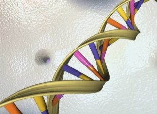 A DNA double helix is seen in an undated artist's illustration released by the National Human Genome Research Institute to Reuters on May 15, 2012. A group of 25 scientists June 2, 2016, proposed an ambitious project to create a synthetic human genome, or genetic blueprint, in an endeavor that is bound to raise concerns over the extent to which human life can or should be engineered. REUTERS/National Human Genome Research Institute/Handout - RTX2FEXW